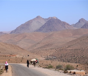 Mules in the Anti Atlas