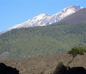 Tree and Volcan Llaima