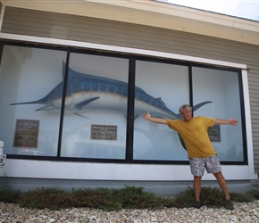 On an outside wall, encased in a glass box, is a world-record, 810-pound blue marlin that was caught on June 11, 1962, off Hatteras Island. The world record has since been broken