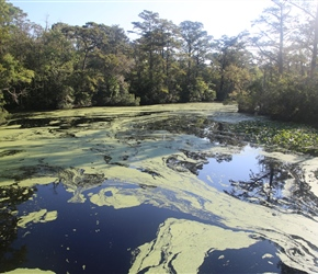 There is a lot of stagnant water/swamps in this part of the USA. In this case near Camden