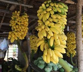 Bananas. The type here are small, fatter and slightly sweeter than the ones we get in the UK