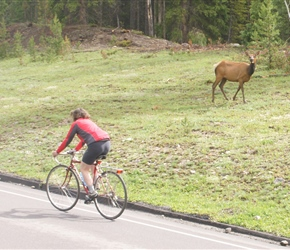Helen passes an Elk at the start of the climb