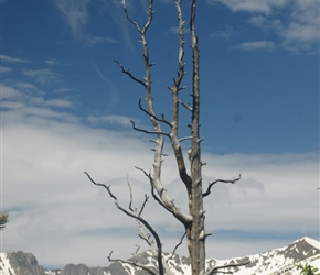 Tree and mountains in the Rocky Mountain National Park