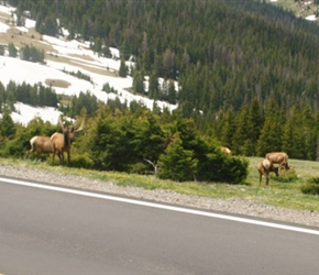 Carel and Malc pass an Elk Herd on the way up