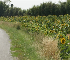 20.08.2012-CTC-Chateau---Jonzac-(34)-Anna,-Katie-and-Louise-pass-sunflowers,-near-Jonzac.jpg