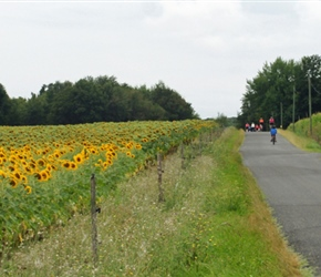 Gilly and Katie passing sunflower fields