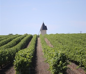 Vineyards and a tower